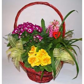 Kosz kwiatów doniczkowych
